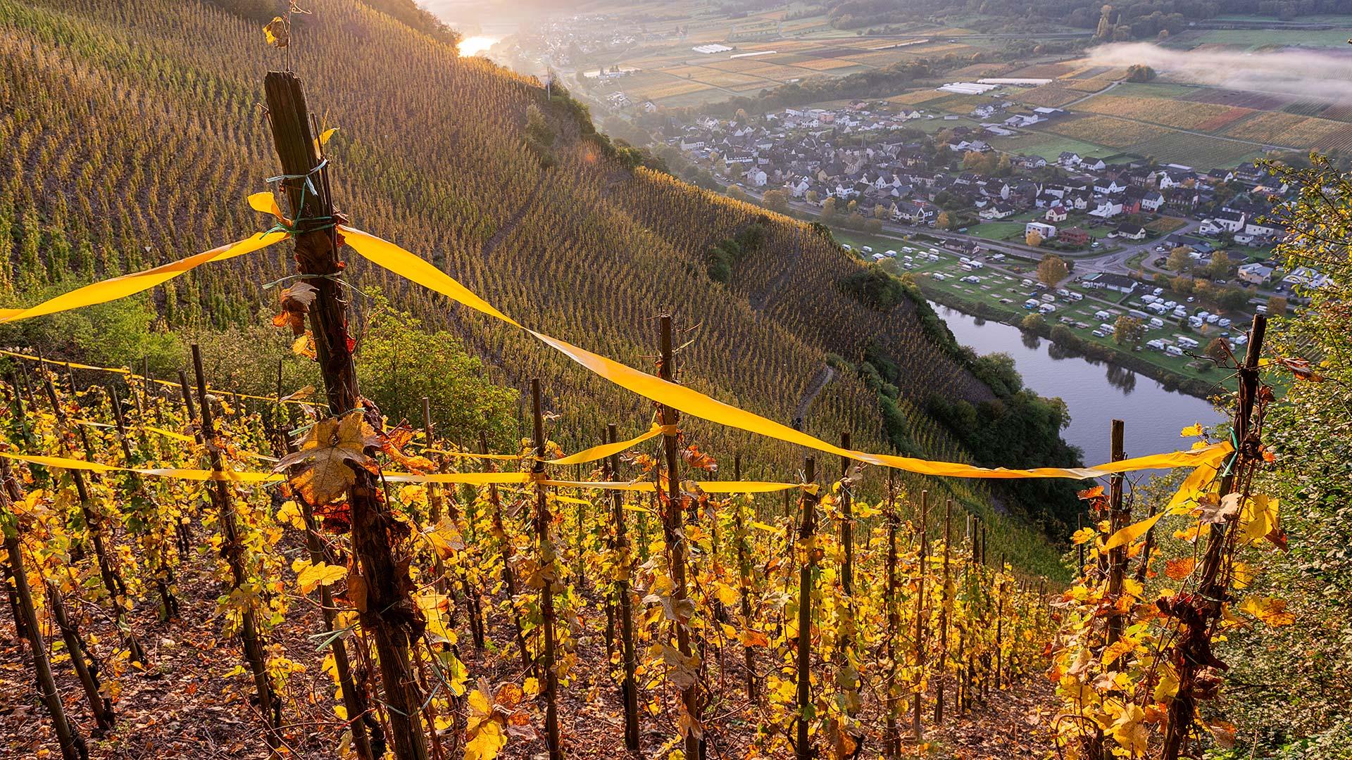 Weinberg im Steilhang